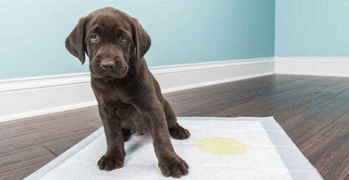 tapis absorbants pour chiens