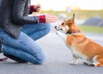 Parti de la formation virtuelle des chiens