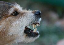 Raisons pour lesquelles les chiens deviennent agressifs et comment l'arrêter