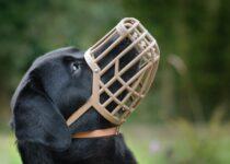 Tout ce que vous devez savoir sur les muselières pour chiens