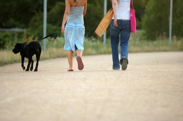 Commandes de base pour les chiens - 5. Marcher à côté ou ensemble
