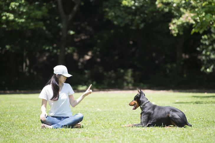 Comment apprendre à votre chien à rester
