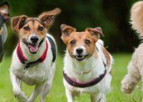 Allergies cutanées chiens