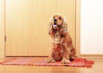 Apprenez à votre chien à attendre aux portes