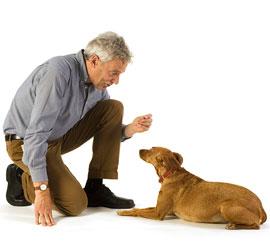 Dressage de chiens: la commande terre