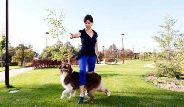Équipement de dressage de chiens