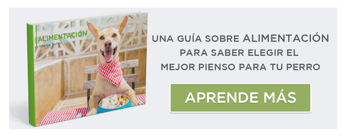 guide d'alimentation canine