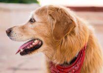 Problèmes dentaires chez le chien