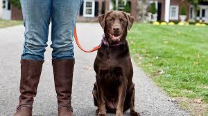 Promener son chien: la commande