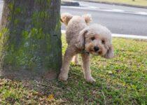 Dresser votre chien à faire du plein air