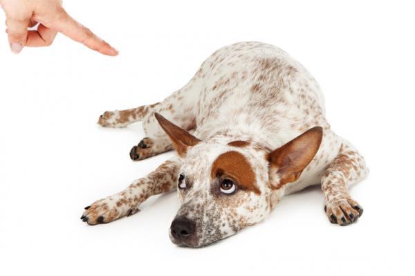 formation d'un chien