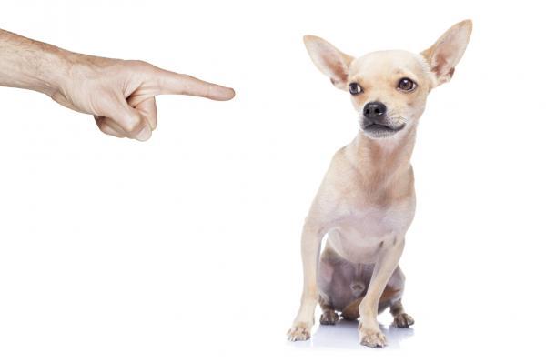 15 erreurs lors de la formation d'un chien - 4. Punitions