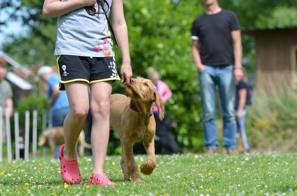 15 erreurs lors de la formation d'un chien - 8. Choisir les mauvaises conditions pour chaque session