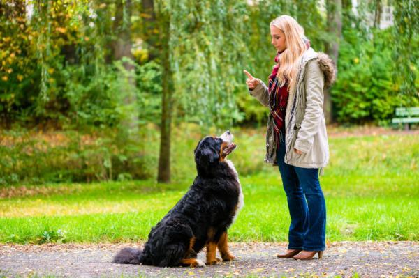 15 erreurs lors de la formation d'un chien - 9. Ne pas généraliser le comportement