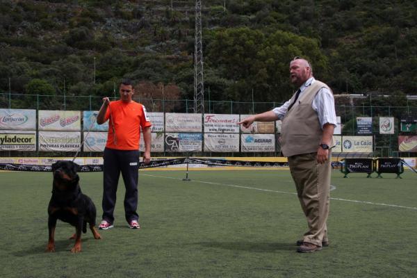 Formation Rottweiler - Les premiers pas de la formation: l'obéissance