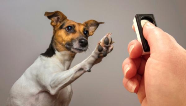 Clicker pour chiens - Tout ce que vous devez savoir à ce sujet - Qu'est-ce que le clicker?