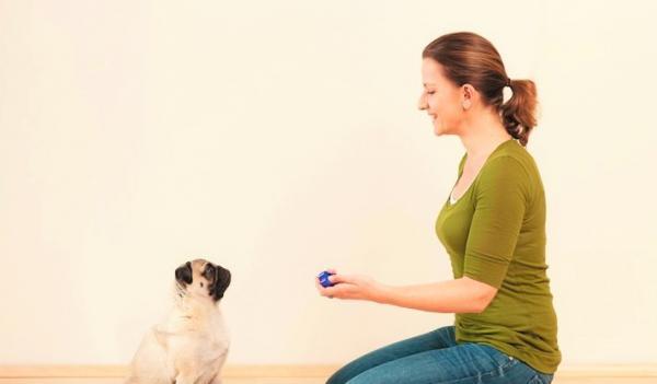 Clicker For Dogs - Tout ce que vous devez savoir à ce sujet - Le Clicker Charge