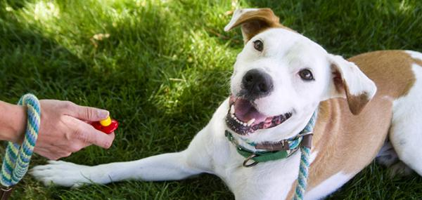 Clicker pour chiens - Tout ce que vous devez savoir à ce sujet - Exemple d'entraînement Clicker