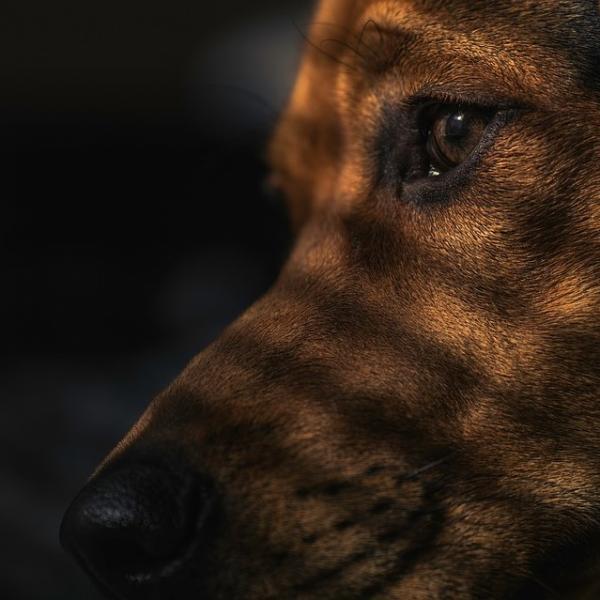 Comment dresser un chien sans race