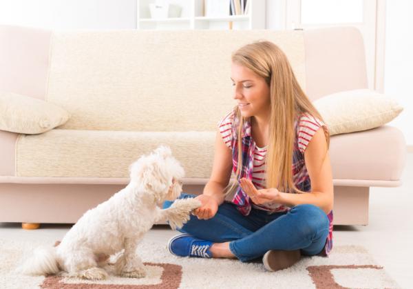 Comment devrait être une séance de dressage de chiens? - Périodes et sessions d'entraînement