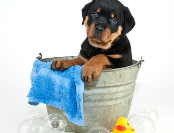 Programme de cours de dressage canine