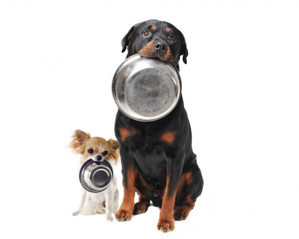 Soins pour chiens Rottweiler - Nourriture