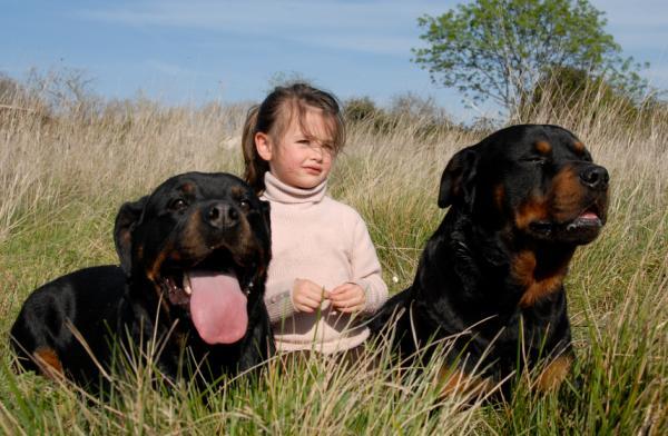 Rottweiler Dog Care - Enrichissement et stimulation