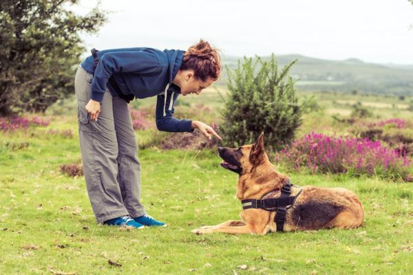 Initiation à la formation canine