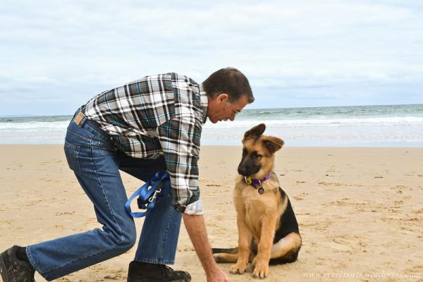 Initiation à la formation canine - Problèmes lors de la formation canine