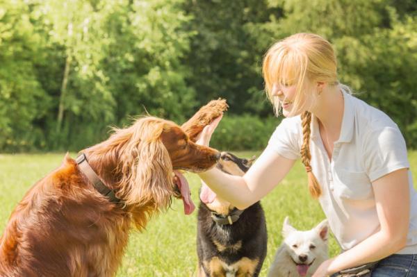 L'ordre de libération dans le dressage de chiens