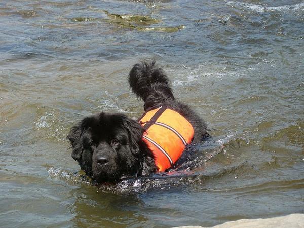 Chiens de recherche et de sauvetage - Caractéristiques des chiens de recherche et de sauvetage
