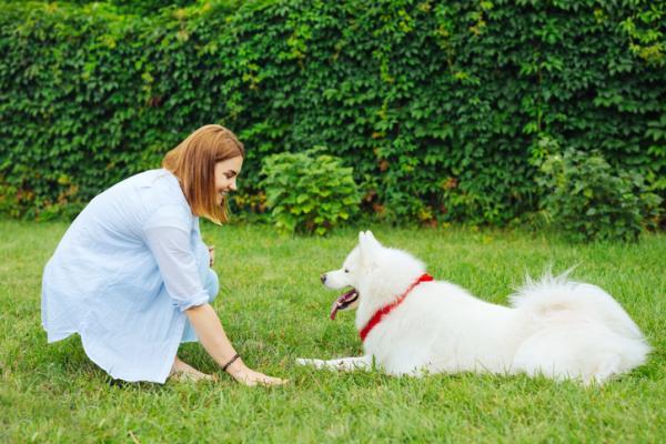 Commandes de base pour chiens