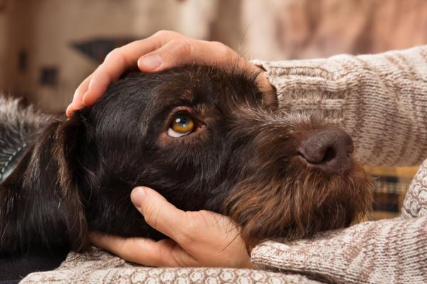 Entraînement cognitif émotionnel du chien - Autres types d'entraînement