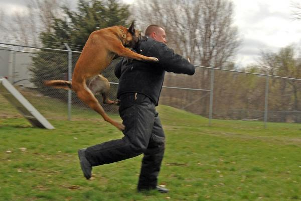 Dressage du chien en défense et en attaque - Problèmes de comportement liés à un mauvais dressage