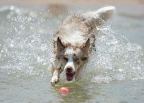 comportement de chien