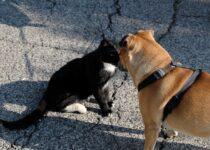 chiens perçoivent-ils les autres animaux
