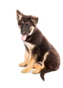 Resoudre les problemes causes par les chiens qui mordent
