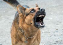 eduquer-un-chien